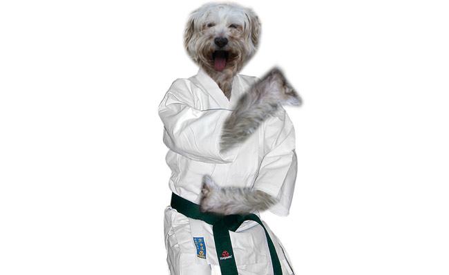 mika-karate